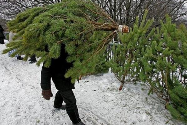 Жители Соколиной горы могут сдать новогодние елки на переработку