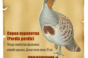 Day of the Animals в Кузьминском парке